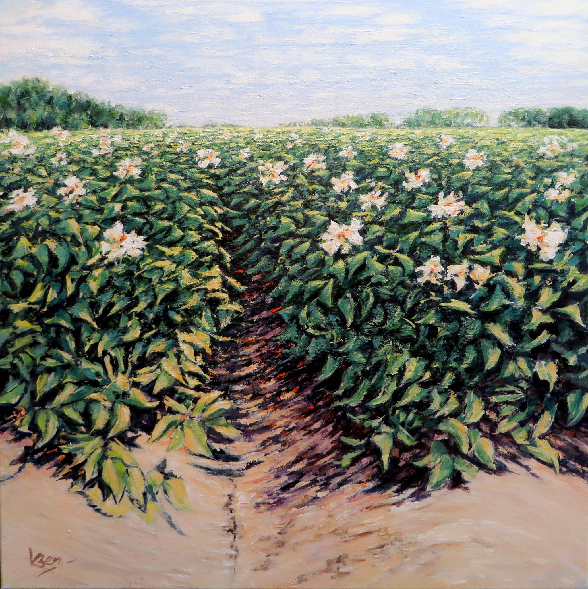 Aardappelveld acryl op doek 90x90 cm